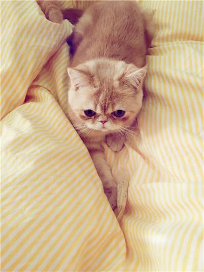 波斯猫拉肚子怎么办?波斯猫拉肚子的原因及治疗方法